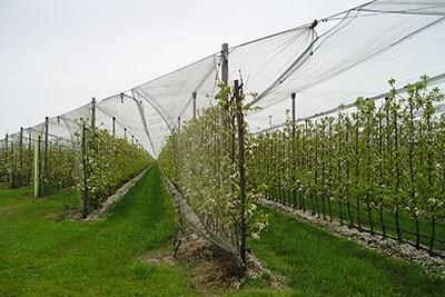 Plase pentru agricultură