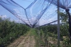 """Ябълкова градина 10 дка в Гоце Делчев Покрита с мрежа против градушка – тип """"Piana"""" (1)"""