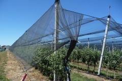 """Ябълкова градина 10 дка в Гоце Делчев Покрита с мрежа против градушка – тип """"Piana"""" (2)"""