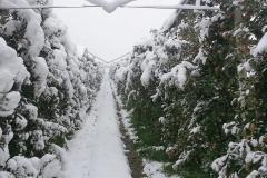 """Ябълкова градина 17 дка в гр.Берковица Покрита с мрежа против градушка, тип """"Capanina"""" (1)"""