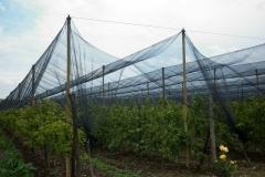 Ябълковата градина на Тихомир Карпов (1)
