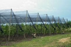 Ябълковата градина на Тихомир Карпов (2)