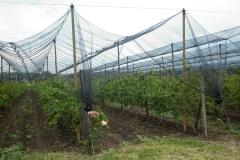 Ябълковата градина на Тихомир Карпов (3)