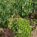 ограда за градина