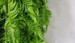 Висящи декоративни растения 4